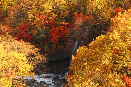 gully:  colorful  leaves and stream  in Gully  Matsukawa