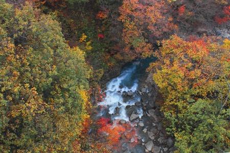gully: hojas de colores y la corriente en Gully Matsukawa