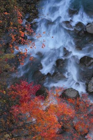gully: hojas de colores y la corriente en el barranco Matsukawa