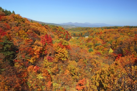 colorful  leaves   in Gully  Matsukawa photo
