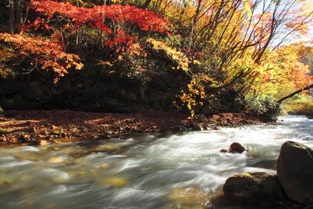gully: hojas de colores en la Quebrada Matsukawa Foto de archivo