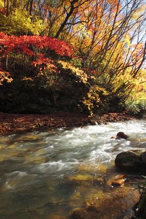 gully:  colorful  leaves   in Gully  Matsukawa