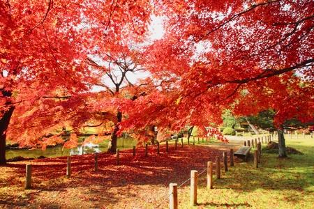 秋にいくつかのカラフルな葉