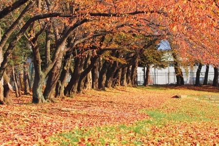 가을에 약간의 화려한 단풍 스톡 콘텐츠