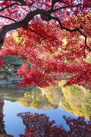 秋の紅葉をクローズ アップ