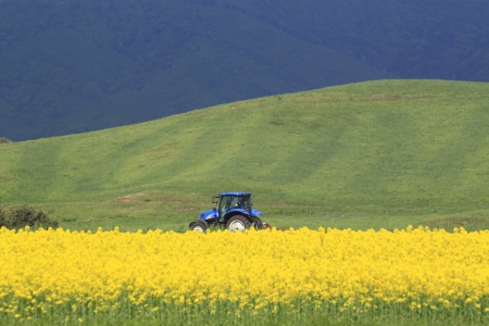 Rape field, canola crops  and  tractor (in Yokohama, town ,Aomori Japan) photo