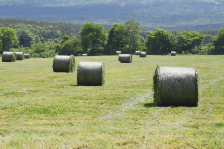 round bales of straw in the meadow Stock Photo - 13996850