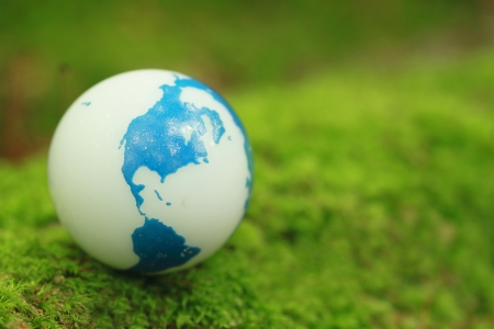 CLose up Moss and globe  in forest photo