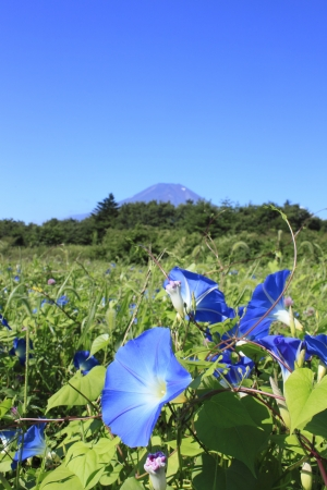Mt . Fuji  and  beautiful flower in  summer photo