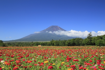 Mt . Fuji  and beautiful Zinnia in  summer photo