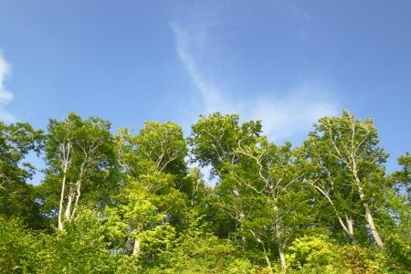 sanchi: Shirakami- Sanchi in Aomori ,Touhoku, Japan