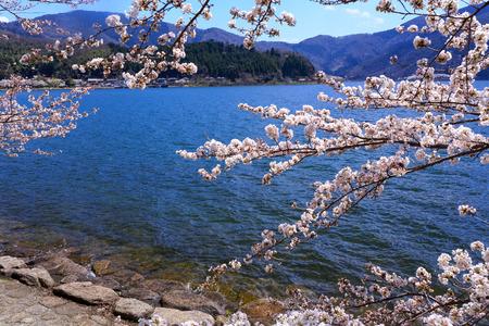 琵琶湖と滋賀県の桜
