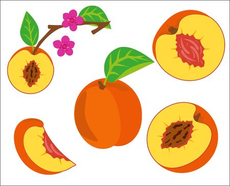 Peach vector image with flower and leaves on a white background Vetores