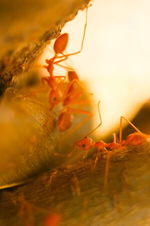 ant ants carrying macro Stock Photo