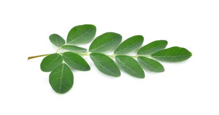 sonjna: Moringa leaves over white background Stock Photo