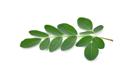 malunggay: Moringa leaves over white background Stock Photo