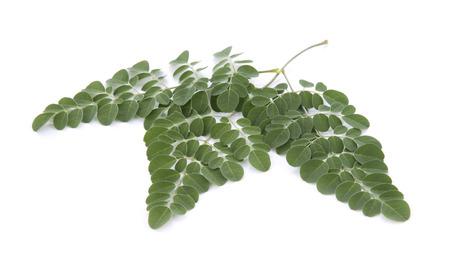 benzolive: Moringa leaves over white background Stock Photo