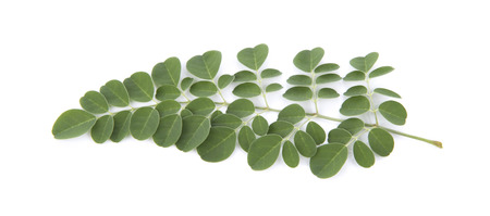 Moringa leaves over white background Stock Photo