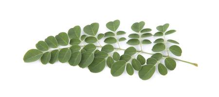 kelor: Moringa leaves over white background Stock Photo