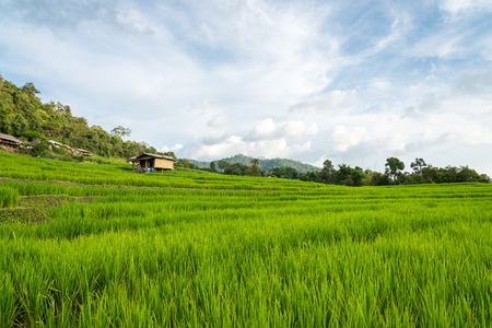 Rice terraces ,Locate on Baan pa bong piang ,Maejam district ,Chaing mai province ,Thailand Stock Photo