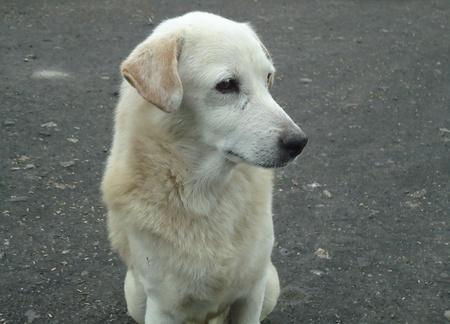close up: close up thai dog