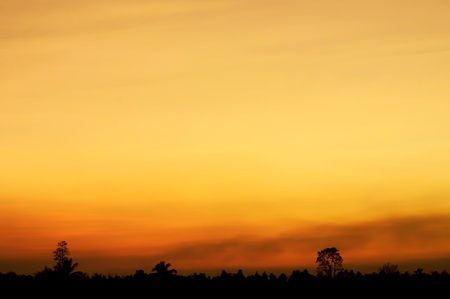 treeline: A forest silhouette beneath a dramatic cloudy sky at sunset