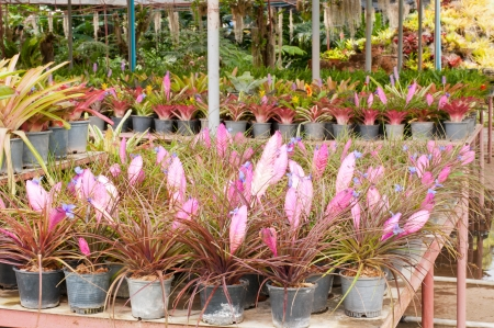 epiphyte: tillandsia in a flower shop and other Bromelia flowers Stock Photo