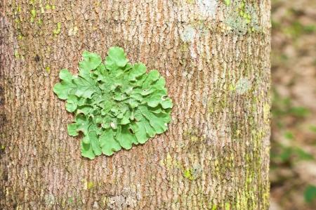 symbiotic: lichen on tree Stock Photo