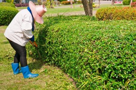 Woman cut bush clippers  photo