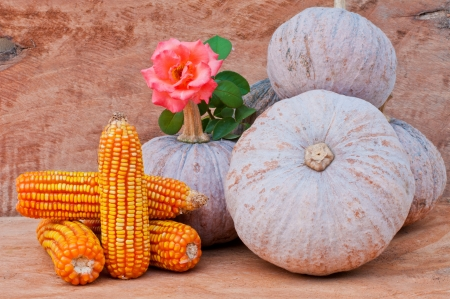 Rustic autumn still life with mini pumpkins, flower and corn on old wood  in background  Macro with shallow dof Stock Photo - 16212031