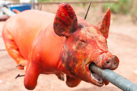grilled pig  photo