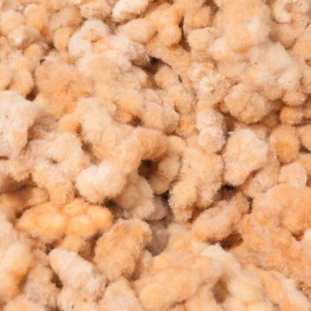 bolls:  Ripe cotton bolls Stock Photo