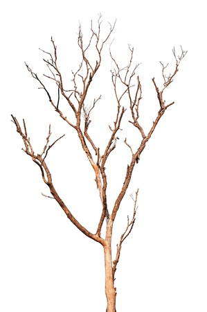 Single old and dead tree isolated on white background  Zdjęcie Seryjne