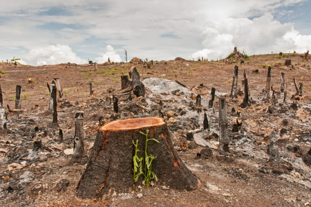 Slash and burn cultivation, rainforest cut and burned to plant crops, Thailand  Banco de Imagens