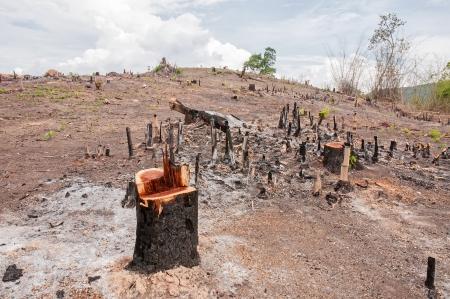 Slash and burn cultivation, rainforest cut and burned to plant crops, Thailand  Standard-Bild