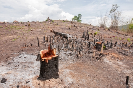 Slash and burn cultivation, rainforest cut and burned to plant crops, Thailand  Stockfoto