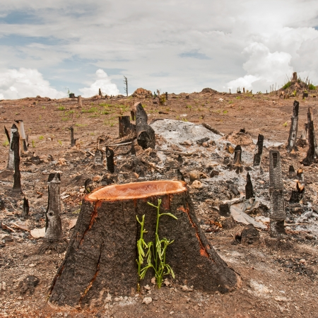 Slash and burn cultivation, rainforest cut and burned to plant crops, Thailand  Stock fotó
