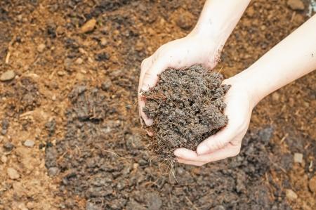 humus soil: Soil- handful,female hands, humus soil