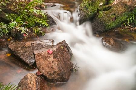 kradueng: Beautiful maple leaves of Phu Kradueng on waterfall Stock Photo
