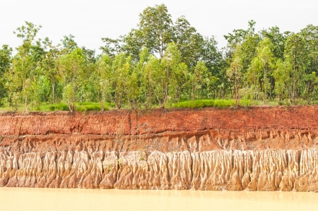 Tree and section of soil  Erosion due to water erosion  photo