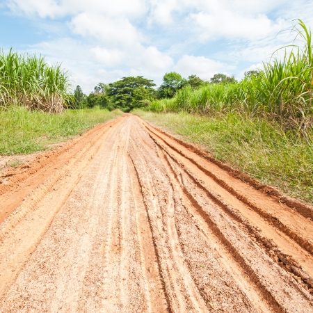 country road through the fields photo