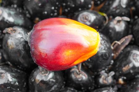 red palm oil: Frutta della palma da olio