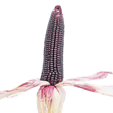 fight disease: purple corn