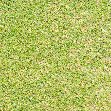 sward: Green grass texture Stock Photo