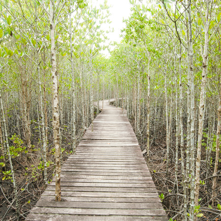 lightsome: Wood path way among the Mangrove forest, Thailand