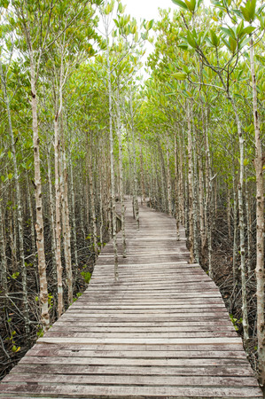 beautify: Wood path way among the Mangrove forest, Thailand