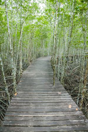 rosy cheeked: forest mangrove