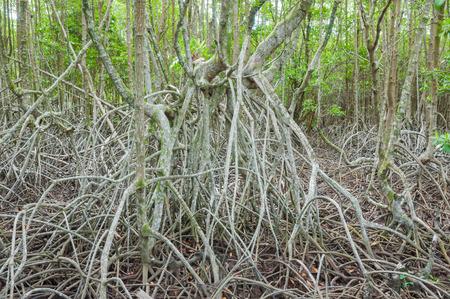 lightsome: forest mangrove