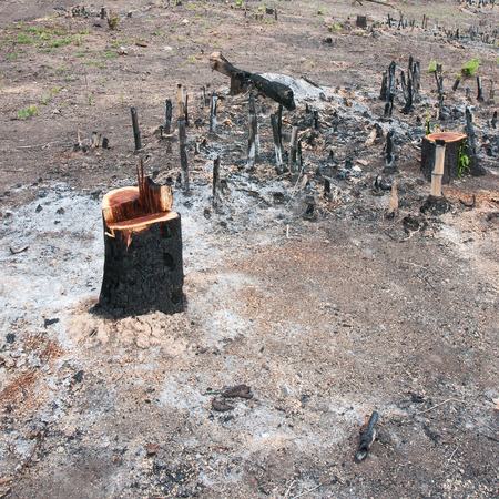 stumped: Tree stump