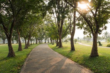 木は、朝の公園の緑の芝生フィールド上の通路。